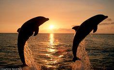 dolphins wallpaper - Buscar con Google