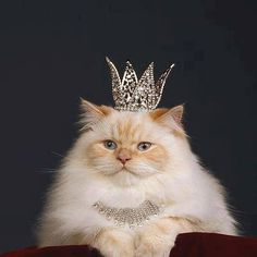 imma princess. give me food. no food? where's the executioner? oh, so now you want to get me food.