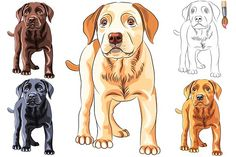 Awesome digital illustrations for digital scrapbooking kit designers and graphic designers. Perfect for scrapbooking elements and papers, card making and invitations. Puppy dog Labrador Retriever SET by kavalenkava on Labrador Retriever, Labrador Breed, Labrador Puppies, Outline Illustration, Digital Illustration, Cute Puppies, Dogs And Puppies, Madara Wallpapers, Madara Susanoo