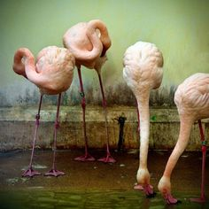 Flamingos - Texture - Perfect, Green, Mildew, Age, Concrete - Pink webbed beet and beaks - The New Victorian Ruralist: November 2014
