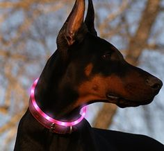 Led Dog Collar USB Rechargeable Glowing Pet Safety Collars Water Resistant Light up Improved Dog Visibility & Safety Adjustable Flashing Collar Best Gift for Dogs by Bseen (Pink) - We are a participant in the Amazon Services LLC Associates Program, an affiliate advertising program designed to provide a means for us to earn fees by linking to Amazon.com and affiliated sites. No extra fee to you Thanks