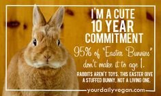 Do rabbits a favor this Easter: encourage friends and family to leave rabbit rescuing to those ready to give it a 10+ year commitment.