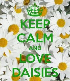 We love daisies too...so much so we use them in our Cell Revive Serum Complete. |  | I Love Daisies | Keep Calm | beauty ingredients | skincare | skin care