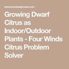 Growing Dwarf Citrus as Indoor/Outdoor Plants - Four Winds Citrus Problem Solver