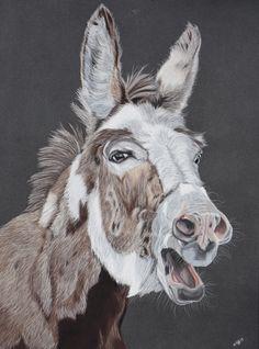 Portrait d'âne Artiste animalier La Galerie de Julie