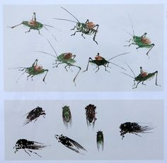 Chinese Painting Book Album of Insects Xiao Lang Brush Ink Art Rong Bao Zhai | eBay