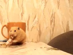 食事中のハムスターを邪魔するネコw