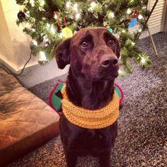 Christmas scarf. Animal Sweater, Christmas Scarf, Animals, Animales, Animaux, Animal, Animais