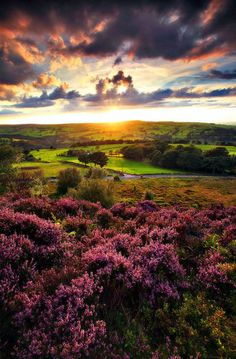 bluepueblo: Sunset Moor, Yorkshire, England photo via diario enchantedengland: Have a look at luthienthye her Archives page makes me weep it...