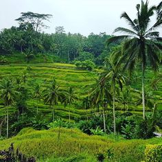 Bali. #ocitrip #ocitripclientes #traveler #bali #islas #vacaciones2016 #clientesporelmundo