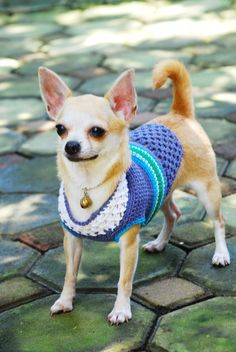 Robin egg blue turquoise Dog Clothing Pet clothes Hand Crochet Chihuahua sweater D849 - Free Shipping. via Etsy.
