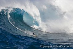 """A tow-in big wave surfer drops to the curl of Hawaii's big surf at Peahi, the """"Jaws"""" off Maui, Hawaii, USA, Pacific Ocean"""