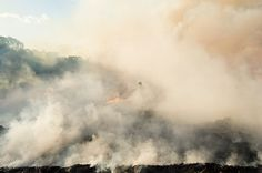 FLIPP Management | Ian & Erick, sugar cane burning in Mauritius