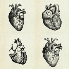 compare against other anatomical drawings to find best image for card