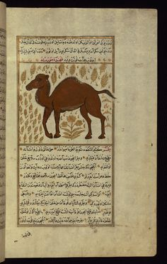 A camel Wonders of Creation  by Qazwīnī 1293 was translated to Turkish in 1717  completed by Rūzmah-ʾi Nāthānī - W659