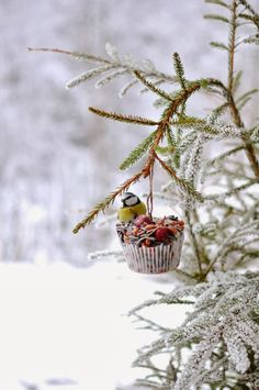 During the coldest days of the year here are a few tips on how to make bird feeders that help birds survive the winter. I Love Winter, Winter Snow, Winter White, Noel Christmas, Winter Christmas, Christmas Feeling, Christmas Treats, Christmas Garden, Christmas Goodies