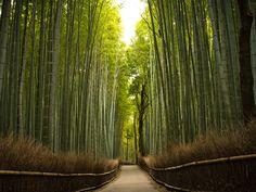 Papel de Parede Gratuito de Natureza : Trilha do Bambuzal