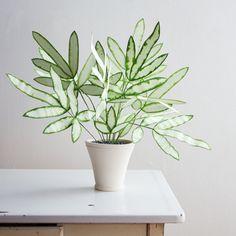 Green Plants, Potted Plants, Indoor Plants, Foliage Plants, Indoor Ferns, Indoor Cactus, Cool Plants, Hanging Plants, Plantas Indoor