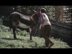 Printre colinele verzi, un film de Nicolae Breban