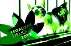...Marijuana libera in Uruguay...