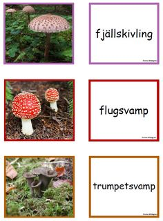 Svamp memory Learn Swedish, Swedish Language, Educational Activities For Kids, Fall Preschool, Autumn Nature, Nature Study, Nature Crafts, Science And Nature, Biology