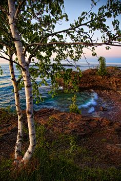 Birch trees along the Lake Superior shore in Marquette, Michigan. Photo by Ceunen Lax-Salinas Michigan Travel, State Of Michigan, Northern Michigan, Lake Michigan, Marquette Michigan, White Birch Trees, Upper Peninsula, Lake Superior, Great Lakes