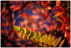 autumn swirl / 500px High Speed Photography, Time Photography, New Perspective, Light And Shadow, Professional Photographer, Photoshop, Autumn, Artist, Kunst