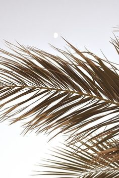 Palm Tree Leaves in BeigeYou can find Palm trees and more on our website.Palm Tree Leaves in Beige Cream Aesthetic, Beach Aesthetic, Brown Aesthetic, Aesthetic Photo, Aesthetic Pictures, Summer Aesthetic, Simple Aesthetic, Aesthetic Backgrounds, Aesthetic Iphone Wallpaper