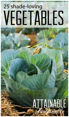 Grow A Vegetable Garden In The Shade. Shade Loving Crops . Plus Ideas To  Increase