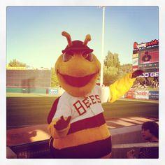 Salt Lake City bees baseball mascot
