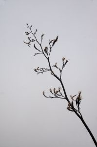 Branch Photo Stock Images, Stock Photos, Free Photos, Royalty Free Images, Amazing Photography, Copyright Free Images