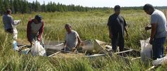 White Earth Wild Rice--this is the place to get it, from real lakes, not farms, gathered in the traditional way.
