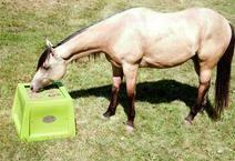 Slow Feeder For Horses - Savvy Feeder Horse Slow Feeder, Dream Barn, Horse Stuff, Tack, Barns, Cabinets, Management, Horses, Ideas