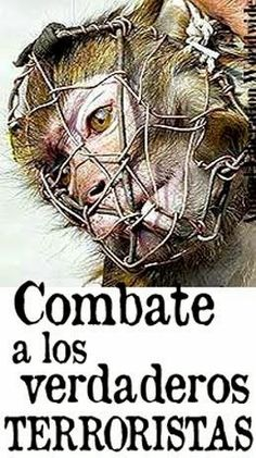 Be a voice & take a stand! Animal Cruelty, Animal Rights, Animals, Freedom, Posters, Illustrations, Natural, People, Frases