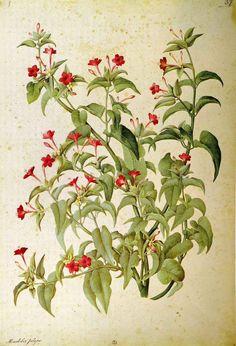 Jacopo Ligozzi ( 1547–1626 ) Флора-фауна и графика. - Ничто не вечно под луной.Уильям Шекспир
