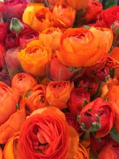 Orange Ranunculus - available in shades of nearly all colors except lavender and blue. Available January through May. Vase life 6-8 days. www.mydaughtersgarden.com