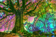 Trippy Trees \x3cb\x3etrippy tree\x3c/b\x3e gif  tumblr