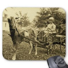 """Shop Vintage Photo- """"Goat Cart""""- Postcard created by Kanikis. Personalize it with photos & text or purchase as is! Old Pictures, Old Photos, Vintage Postcards, Vintage Photos, Goat Care, Goat Farming, Horse Carriage, Farm Animals, Wild Animals"""