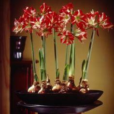 20 Beautiful Indoor Flower Plants Flowering Flowers Potted