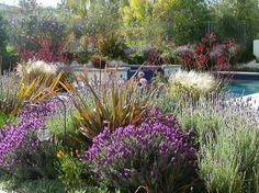Drought Tolerant Landscape  Garden Design  Erin's Gardens  Albuquerque, NM
