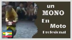 VideoViral:Un mono en moto profesional--http://bit.ly/1NnEB8Q