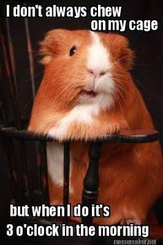 Hamster Humor! #CreakCreak