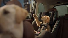 """Check out the video titled """"Subaru 2019 The Barkleys Honk Spot"""" from Subaru. Dog Test, Funny Commercials, Pet Dogs, Pets, Dog Bag, Dog Houses, Pet Store, Subaru, Funny Dogs"""