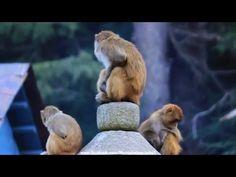 Monkey 2nd Clip