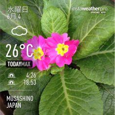 おはようございます。  昨日は北海道で37℃とか(°_°) いったいどうなってしまったんでしょうか。  今日から少しは気温下がるようですが、代わりに梅雨がやってきそうですね。  今日もよろしくお願いします(^ ^)