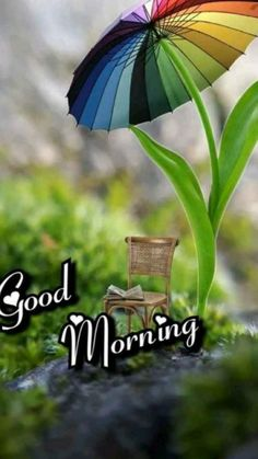 Good Morning Flowers Quotes, Good Morning Friends Images, Good Morning Beautiful Pictures, Good Morning Happy Sunday, Good Morning Roses, Good Morning Beautiful Images, Good Morning Images Download, Good Morning Gif, Good Night Quotes
