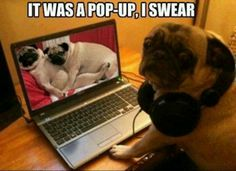 Surfing the net Pug.