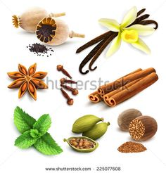 Herbs and spices decorative elements set of poppy seed vanilla cinnamon isolated vector illustration