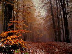 Foresta di Vallombrosa - Autunno