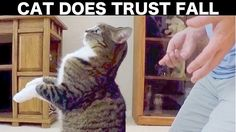 Cat does trust fall.